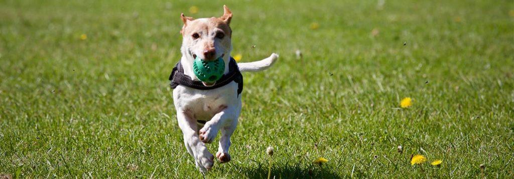 dog-run-park