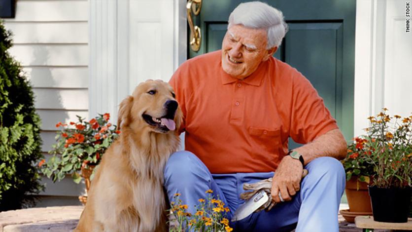 Kitchen Dog Website Blog Photo Safety Benefits